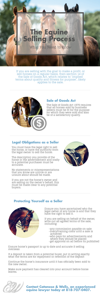 Equine Selling Process
